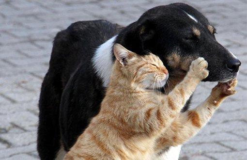 Hayvan eşya sayılınca şiddet cezasız kalıyor
